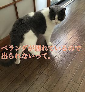 「ちぇっ」10/16wed