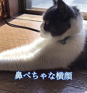 「日向でウトウト」11/18mon