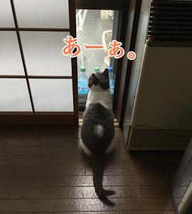 「恵みの雨」2/17mon