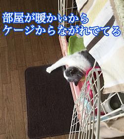 「はぁ〜っと緩もう♪」4/8wed