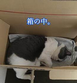 「ハマる」7/4sat