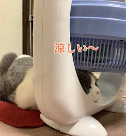 「吸われるネコ」9/12sat