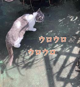 「レモングラス鑑定猫」10/21wed