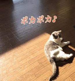 「いい感じ☆」11/29sun