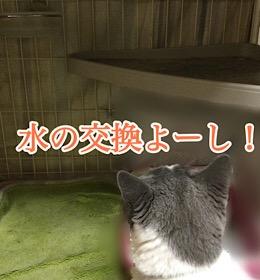 「チェック〜」12/6sun
