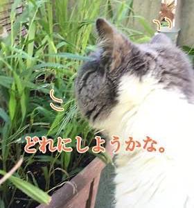 「今日はどれに〜」8/28sat