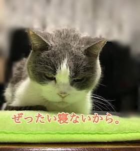 「寝たくないのに」9/4sat