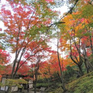 常寂光寺 黄葉が紅葉に色変わり(2020.11.18)
