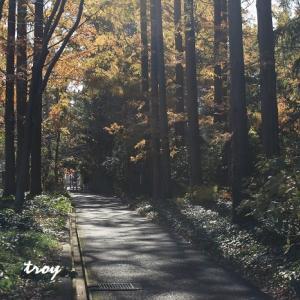水戸市植物公園191129-5