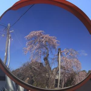 宍戸桜20200324-7