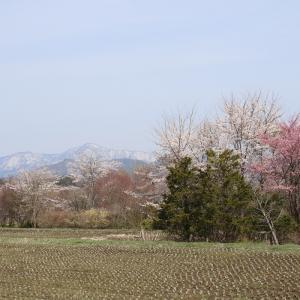 菜種梅雨(なたねづゆ)