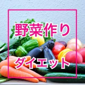 野菜が死んで学んだダイエットの極意