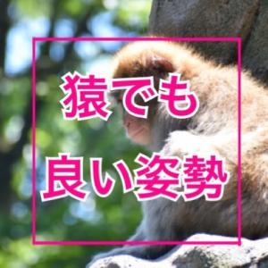 猿だって猫背姿勢が良くなる簡単な方法