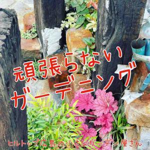 【ガーデニング】頑張らないガーデニング ヒルトップ広島の小さなガーデン屋さん