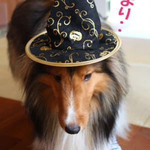 セリアのお犬様用ハロウィングッズ