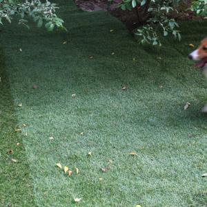 芝刈りしたら勢いが乗ってきた