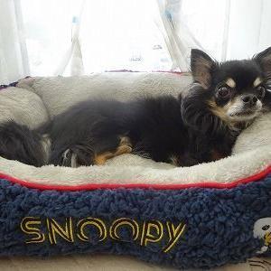 SNOOPYのベット ♪♪