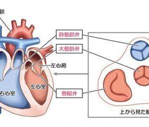 心臓弁膜症(その1)