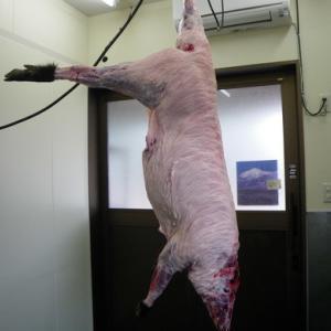 コロナ禍の最中に豚コレラ
