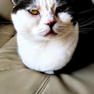 今日は脱力〜外に憧れが過ぎるネコ〜