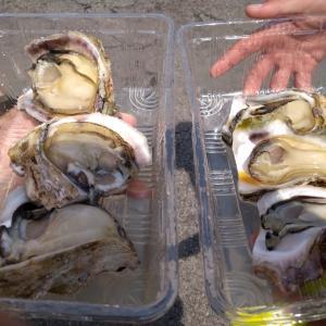 牡蠣とイカ