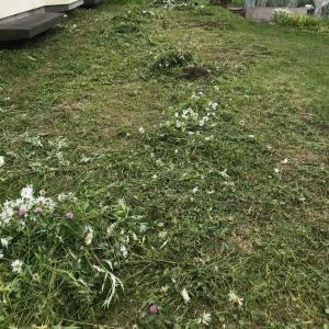 草を刈りまくってきました