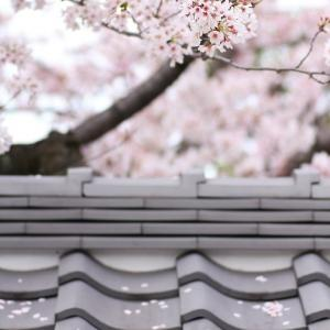 有松の町並み ( 絞りの町 有松・旧東海道沿いの古い町並み ) No.172  ≪ 2016 春  ≫