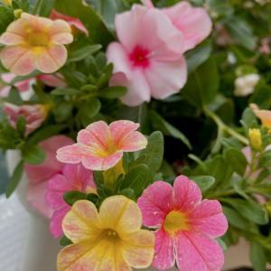 暑すぎる夏の花達☆