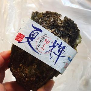 鳥取県から届いたもの
