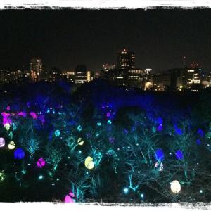 たまごと夜景と光さん☆