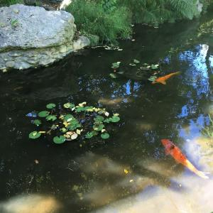 オースティンの日本庭園に行って来ました