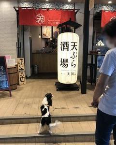 天ぷらバー、生まれ変わる(テラスペット可)