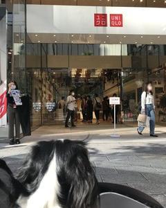 【愛犬家へ朗報】ユニクロ…ついに!!