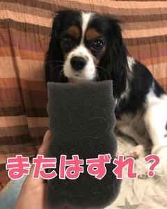 抜け毛対策商品<フリーランドリー>は…?忖度ナシ!