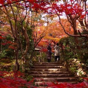 嵐山りらっくま茶房 厭離庵 亀山公園から絶景を臨む