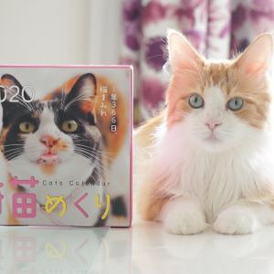 猫めくりカレンダー2020