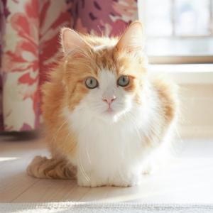 秋の子猫ちゃん