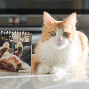 なごみ猫カレンダー2020