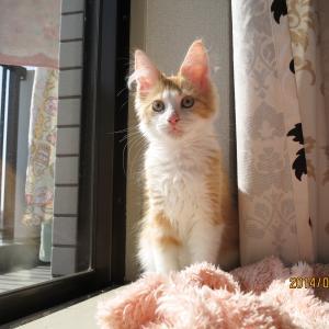 今日は猫の日、「なんだコレ猫ちゃん」とCreema最終出品の日