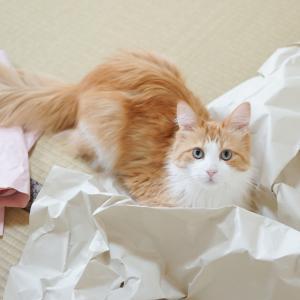 梱包紙ブーム