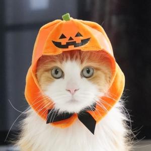 ねこのかぶりものかぼちゃ2020