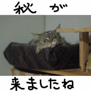猫ベッド秋仕様
