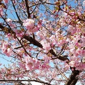 春を探しに♪