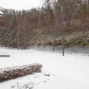 冬本番!…今朝雪が降った
