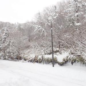 今冬初の大雪が降る!