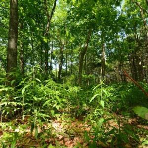 鬱蒼…空気が美味い森の中!