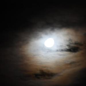 妖艶…妖しく輝く月光