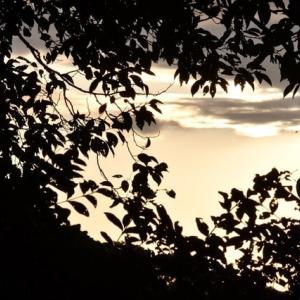 木の葉に囲まれた空