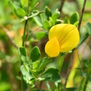 空地の小さな黄色い花