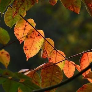 小さな紅葉ぶらり旅…